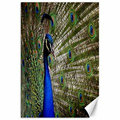 Peacock Canvas 20  X 30  (unframed) by Siebenhuehner