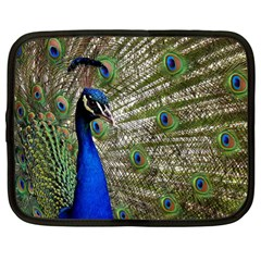 Peacock Netbook Case (xl)