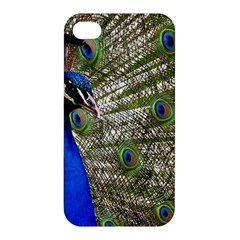Peacock Apple Iphone 4/4s Hardshell Case by Siebenhuehner