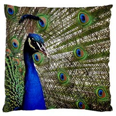 Peacock Large Cushion Case (two Sided)  by Siebenhuehner
