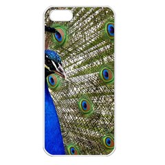 Peacock Apple Iphone 5 Seamless Case (white) by Siebenhuehner