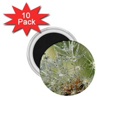 Dandelion 1 75  Button Magnet (10 Pack) by Siebenhuehner