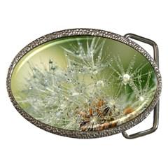 Dandelion Belt Buckle (oval) by Siebenhuehner