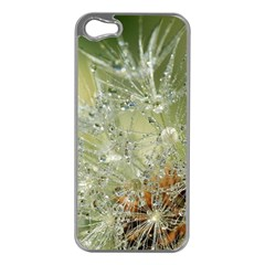 Dandelion Apple Iphone 5 Case (silver)
