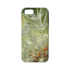 Dandelion Apple Iphone 5 Classic Hardshell Case (pc+silicone) by Siebenhuehner