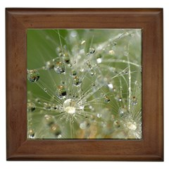 Dandelion Framed Ceramic Tile by Siebenhuehner