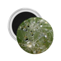 Dandelion 2 25  Button Magnet by Siebenhuehner
