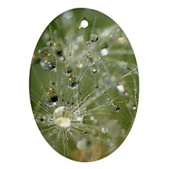 Dandelion Oval Ornament (two Sides) by Siebenhuehner