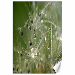Dandelion Canvas 20  X 30  (unframed) by Siebenhuehner