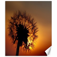 Dandelion Canvas 20  X 24  (unframed) by Siebenhuehner