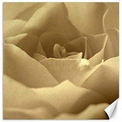 Rose  Canvas 20  X 20  (unframed) by Siebenhuehner