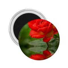 Rose 2 25  Button Magnet by Siebenhuehner