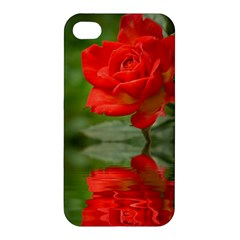 Rose Apple Iphone 4/4s Premium Hardshell Case by Siebenhuehner