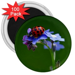 Good Luck 3  Button Magnet (100 Pack) by Siebenhuehner