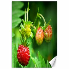 Strawberry  Canvas 12  X 18  (unframed) by Siebenhuehner