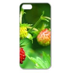 Strawberry  Apple Seamless Iphone 5 Case (clear) by Siebenhuehner