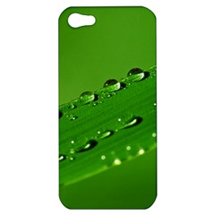 Waterdrops Apple Iphone 5 Hardshell Case by Siebenhuehner