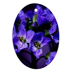Cuckoo Flower Oval Ornament