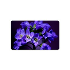 Cuckoo Flower Magnet (name Card)