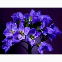 Cuckoo Flower Canvas 12  X 16  (unframed) by Siebenhuehner