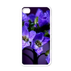 Cuckoo Flower Apple Iphone 4 Case (white) by Siebenhuehner