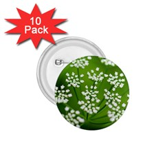 Queen Anne s Lace 1 75  Button (10 Pack)