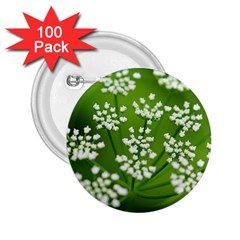 Queen Anne s Lace 2 25  Button (100 Pack)