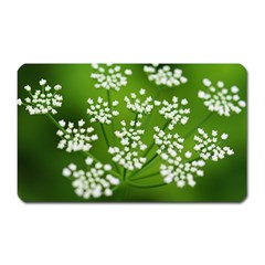 Queen Anne s Lace Magnet (rectangular)