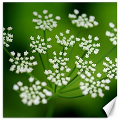 Queen Anne s Lace Canvas 16  X 16  (unframed) by Siebenhuehner