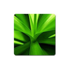 Yucca Palm  Magnet (square) by Siebenhuehner
