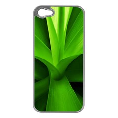 Yucca Palm  Apple Iphone 5 Case (silver) by Siebenhuehner