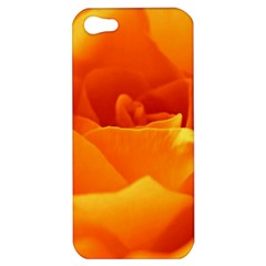 Rose Apple Iphone 5 Hardshell Case by Siebenhuehner