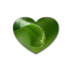 Leaf Drink Coasters (heart) by Siebenhuehner