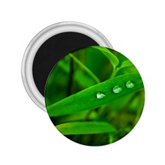Bamboo Leaf With Drops 2 25  Button Magnet by Siebenhuehner
