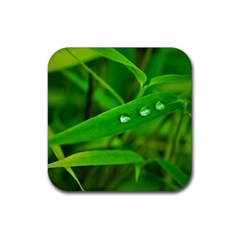 Bamboo Leaf With Drops Drink Coasters 4 Pack (square) by Siebenhuehner