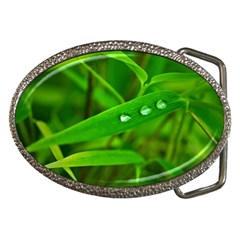 Bamboo Leaf With Drops Belt Buckle (oval)