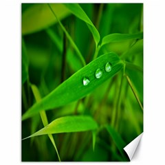 Bamboo Leaf With Drops Canvas 18  X 24  (unframed) by Siebenhuehner