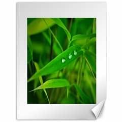 Bamboo Leaf With Drops Canvas 36  X 48  (unframed) by Siebenhuehner