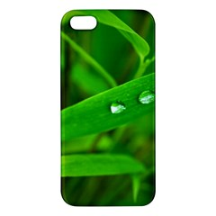 Bamboo Leaf With Drops Iphone 5 Premium Hardshell Case by Siebenhuehner
