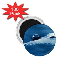 Drops 1 75  Button Magnet (100 Pack) by Siebenhuehner