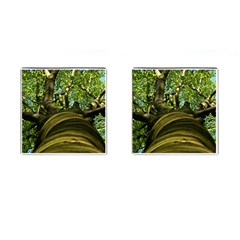 Tree Cufflinks (square) by Siebenhuehner