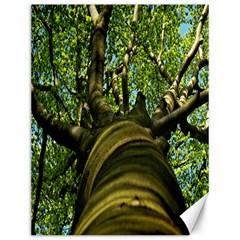 Tree Canvas 12  X 16  (unframed) by Siebenhuehner