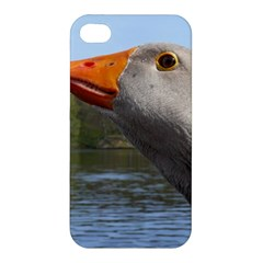 Geese Apple Iphone 4/4s Hardshell Case by Siebenhuehner