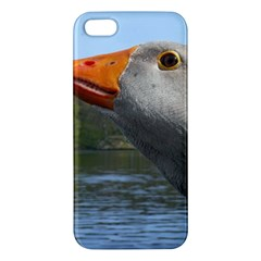 Geese Iphone 5 Premium Hardshell Case by Siebenhuehner