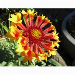 2014 Flower Calendar  By Mim   Wall Calendar 11  X 8 5  (12 Months)   J5vucmli8ylv   Www Artscow Com Month