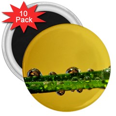 Drops 3  Button Magnet (10 Pack) by Siebenhuehner