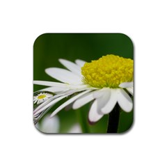 Daisy With Drops Drink Coasters 4 Pack (square)