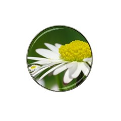 Daisy With Drops Golf Ball Marker 4 Pack (for Hat Clip) by Siebenhuehner