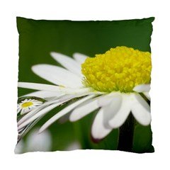 Daisy With Drops Cushion Case (single Sided)  by Siebenhuehner