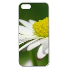 Daisy With Drops Apple Seamless Iphone 5 Case (clear) by Siebenhuehner